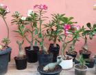Não só pela beleza e aroma, mas também como terapia, cultivar flores alia o prazer com a rentabilidade