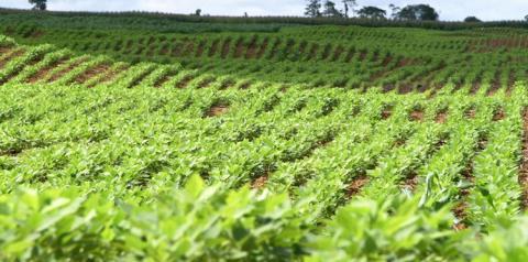 Agricultores paraenses terão crédito fundiário de R$ 16 milhões.