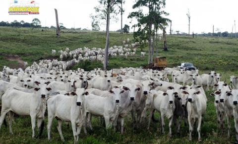 Programa Territórios Sustentáveis realiza intercâmbio com pecuaristas de Oriximiná