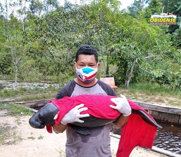 Filhote de peixe-boi no sítio do proprietário Elizaldo
