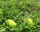 Fomentando a Agricultura Familiar na Comunidade Barra em Juruti | Portal Obidense