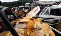 Embarcação é apreendida com 5 toneladas de carne de animal silvestre e pirarucu | Portal Obidense