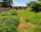 Moradores do bairro São Francisco em Óbidos, dividem espaço com matagal nas ruas do bairro | Portal Obidense