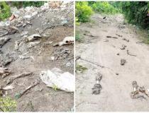 Resíduos de origem animal são descartados, inadequadamente, no ramal do Fernando no Distrito do Flexal | Portal Obidense