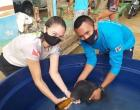 SEMMA Oriximiná resgata filhote de peixe-boi | Portal Obidense
