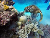 Mudança climática ameaça Patrimônio Mundial Natural | Portal Obidense
