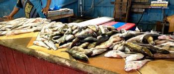 Mercado do Peixe - Aumenta a procura de pescado na Semana Santa   Portal Obidense