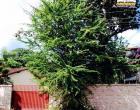 Equatorial Pará orienta sobre plantio e podas de árvores nas cidades | Portal Obidense
