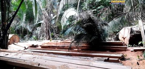 Moradores da comunidade Cruzeirão em Óbidos, denunciam extração de madeira ilegal   Portal Obidense