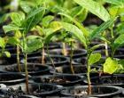População pode pedir mudas de árvores para plantar em São Paulo