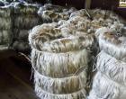 Parceria entre os Governos do Pará e do Amazonas fomenta a produção de malva e juta | Portal Obidense