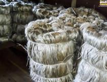 Parceria entre os Governos do Pará e do Amazonas fomenta a produção de malva e juta   Portal Obidense