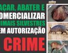 Combate a caça e comercialização de animais silvestres | Portal Obidense