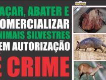 Combate a caça e comercialização de animais silvestres   Portal Obidense