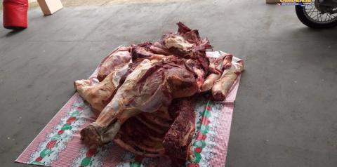 Polícia de Oriximiná prende quadrilha especializada em roubo de gado e venda de carne clandestina.