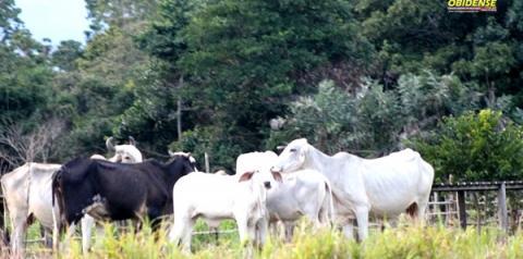 Vereadores cobram fiscalização do Procon em relação ao preço da carne bovina em Óbidos | Portal Obidense