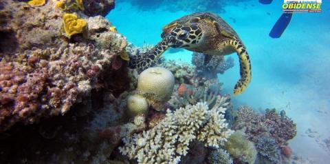 Mudança climática ameaça Patrimônio Mundial Natural   Portal Obidense