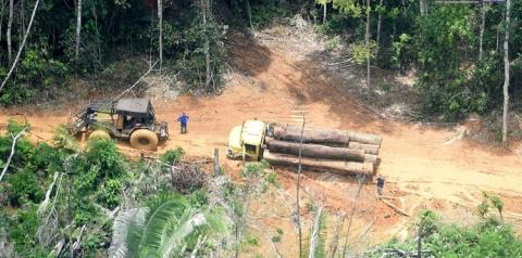 Povo Karipuna processa União, Funai e estado de Rondônia por invasões e devastação da terra indígena | Portal Obidense