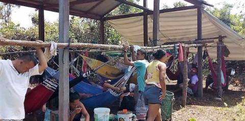 Castanheiros clamam por liberação da Área dos Campos Gerais   Portal Obidense