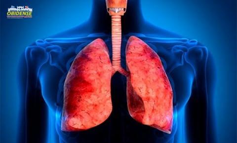 Saiba o que é como funciona o nosso sistema respiratório