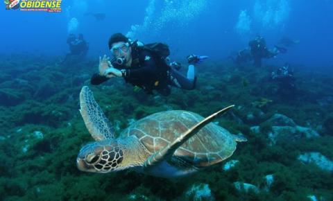 Paraíso: Arquipélago Fernando de Noronha