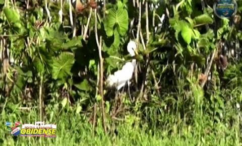 A fauna e flora na comunidade do Mondongo, encanta e surpreende, na luta pela sobrevivência.