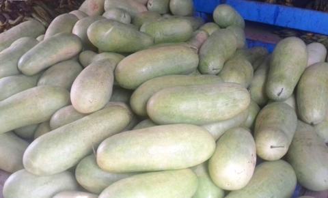 Após a vazante do rio amazonas, o solo fica fértil e muitos agricultores e ribeirinhos começam a colher suas melancias para venda na feira da cidade