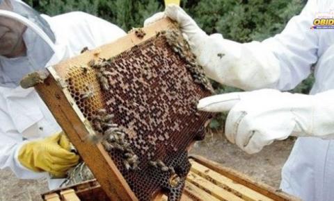 SEMAB fomenta negócios da apicultura em Óbidos.