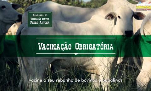 ADEPARA inicia campanha de vacinação contra febre aftosa em Faro e Terra Santa