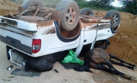 Para a policia Militar final de semana tranquilo. Acidente na PA-437 carro colide com animal e foragido foi preso.
