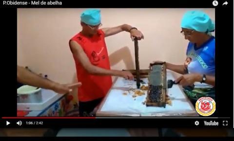 Vídeo-Reportagem: Economia familiar, na produção de mel de abelha em Óbidos, um projeto que pode fomentar a economia do município