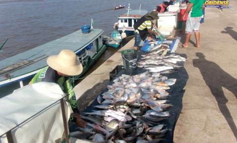 Na frente da cidade de Óbidos, fartura de pescado em um ciclo que se repete anualmente, o fenômeno da piracema