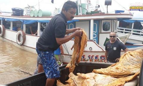 Mais de 35 toneladas de peixes da espécie Pirarucú, Baiano e Jacaré foram apreendidos no município de Óbidos pela SEMMA.
