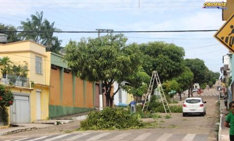 Podagem de árvores foram realizadas para melhorar iluminação pública em Óbidos