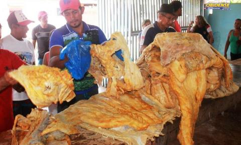 Secretaria Municipal de Meio Ambiente, distribui pescado apreendido para população em Óbidos
