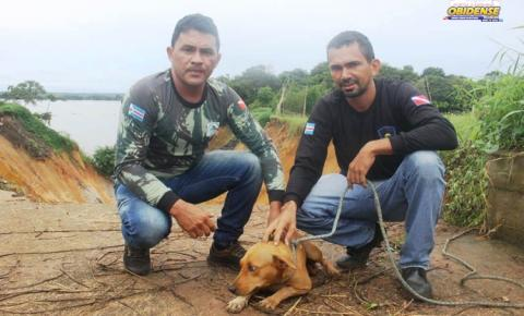 Agentes da SEMMA resgatam animal que caiu em cratera próximo a AABB