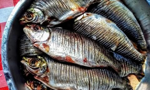 Óbidos, a cidade contemplada com Fartura de Peixes de espécies variadas