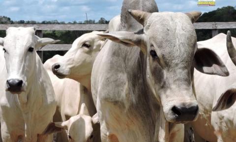 Prazo para produtor comprar vacina e vacinar rebanho encerra neste dia 15 de junho diz ADEPARA