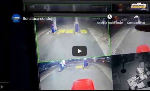 Homem foi quase vítima de um boi no posto Equador em Oriximiná