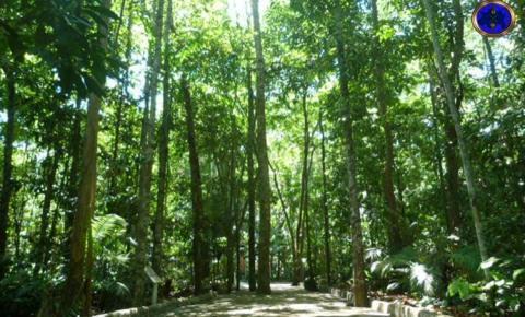 Dia mundial da árvore | Portal Obidense