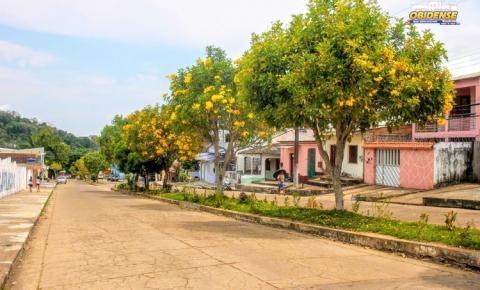 Ipês florescem e transformam a paisagem pelas ruas da histórica Óbidos | Portal Obidense