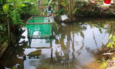 Fonte de renda - Alevinos são levados a comunidade rural de Óbidos | Portal Obidense