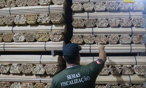 Semas apreende mais de 1 milhão de cabos de vassoura explorados irregularmente | Porta Obidense