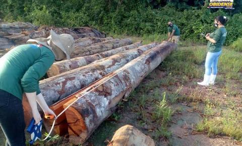 Semas divulga o balanço total da maior apreensão de madeira do ano | Portal Obidense