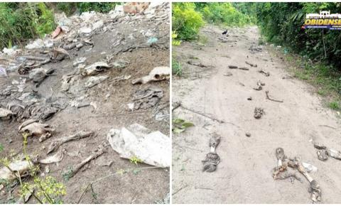 Resíduos de origem animal são descartados, inadequadamente, no ramal do Fernando no Distrito do Flexal   Portal Obidense