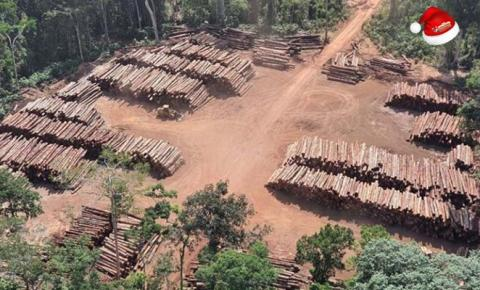 43,7 mil toras de madeira ilegal no Pará, são apreendidas pela PF | Portal Obidense