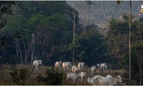 Proteger a natureza e os animais reduzirá os efeitos de futuras pandemias, aponta relatório | Portal Obidense