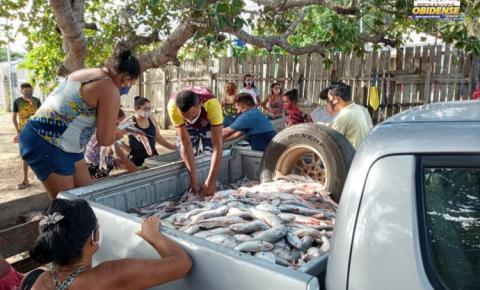 Peixe apreendida pela Sema está sendo distribuído nos bairros de Óbidos | Portal Obidense