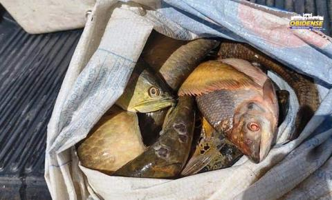 SEMMA Oriximiná faz apreensão de pescado | Portal Obidense