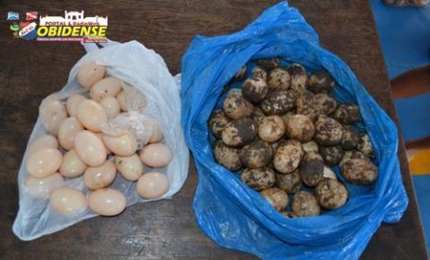 Tambaqui e ovos de quelônios são apreendidos pela SEMMA de Óbidos